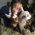 Young girl with two newborn alpine goats